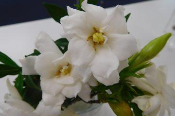 初夏の植物